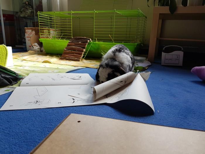 dürfen meerschweinchen fenchel essen